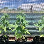 Kevin Bishop: Hemp Hits the Big Bend